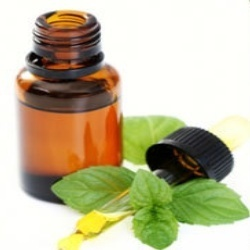 Mentha Arvensis Oil