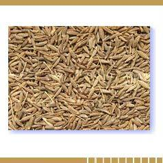 Cumin Seeds - Health Benefits