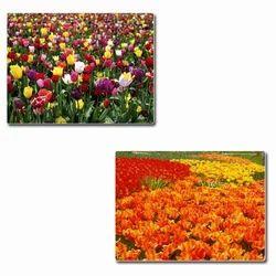 Floricultural Services
