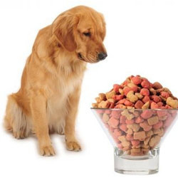 dog feeds
