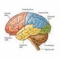 Memory Enhancement Treatment