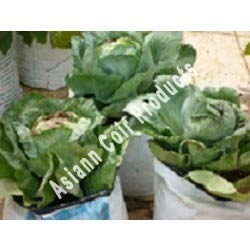 Cabbage Grow Bags