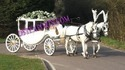 New Covered Horse Carriage