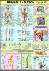Skeleton Charts