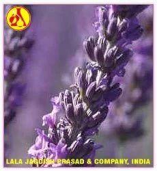 Lavendin Alititude Essential Oil