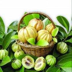 Garcinia Cambogia,Pure Herbs,Delhi,India,ID: 1953672495