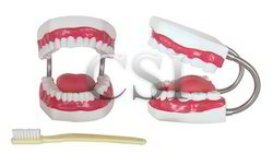 Tooth Hygiene Set