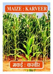 Maize Seed- Karveer