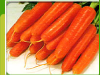 Carrot  F-1 Suttind Nanteco