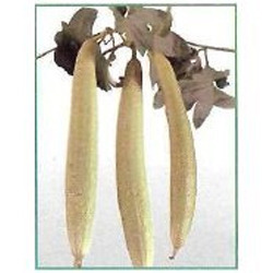 Spongegourd Seeds