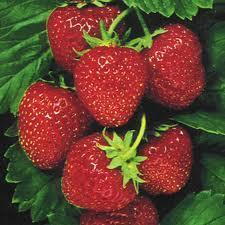 Strawberry Perfume Oils