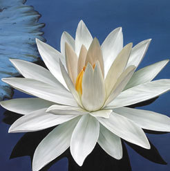 White Lotus