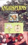 Angiosperms, Pooja  Book