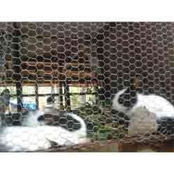 special features of rabbit farming