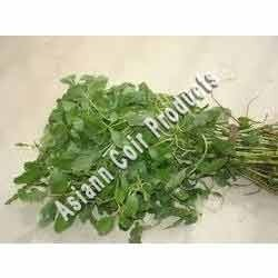 Tropical Amarnath Grow Bags