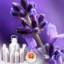Lavender (true) French oil - Certified Organic