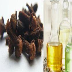 Clove Oil Leaf