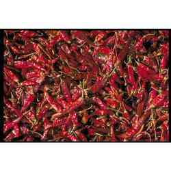 Kashmiri Chilli A Grade Red Chillies, Packaging Size: 5 Kg, Pan India