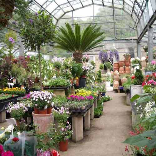 Nursery Plants View Specifications Amp Details Of