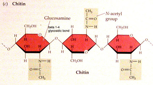 Chitin & High Density Chitosan Manufacturer from Chennai