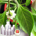 Green Chilli Oleoresin (3.3 % Capsaicin)