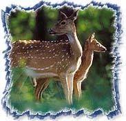 Indian Wildlife Sancturay Tours 01