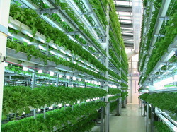 Aeroponic Cultivation Consultancy