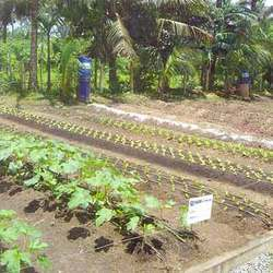Micro-Drip Irrigation Projects
