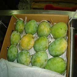 Semi Ripen Mango