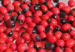 Mani Seeds