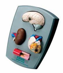 Four-Piece Hypertension Model