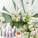 Coriander Oil - Certified Organic