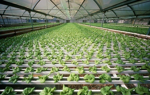 Plant Cultivation Services Hydroponics Cultivation