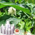 Capsicum Oleoresin 10% Capsaicin Oil