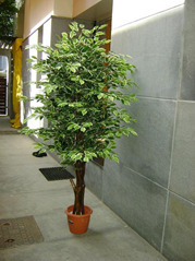 artificial plants in ludhiana, punjab | fake plant suppliers Artificial Ornamental Plants