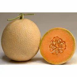 muskmelon fruits bandra east mumbai elite exim id 3715287755