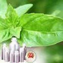 Indian Basil Oil (Chavicol)