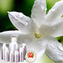 Jasmine Absolute Oil