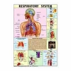 HP09S-Respiratory System