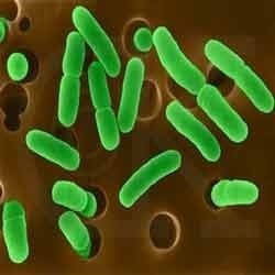 Bacteriological