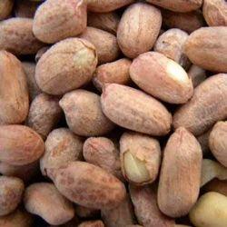 Salted Peanuts Bold
