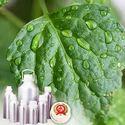 Patchouli Oil - Certified Organic