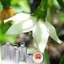 Oleoresin Paprika 40000 CU, DE- Odourised