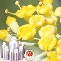 Fennel Sweet Oil - Certified Organic