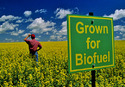 Biofuel Crop Cultivation Consultancy