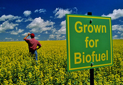 Biofuel Crop Cultivation Consultancy