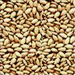 Sesame/Hulled Seeds