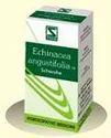 Echinacea angustifolia 1X