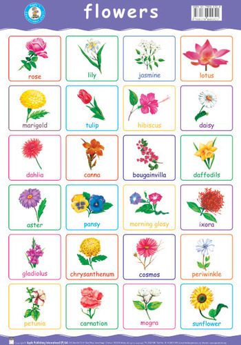 flowers name list in tamil - photo #24