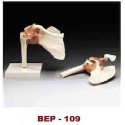 Shoulder Joint Life Siz Model ( BEP-109 )